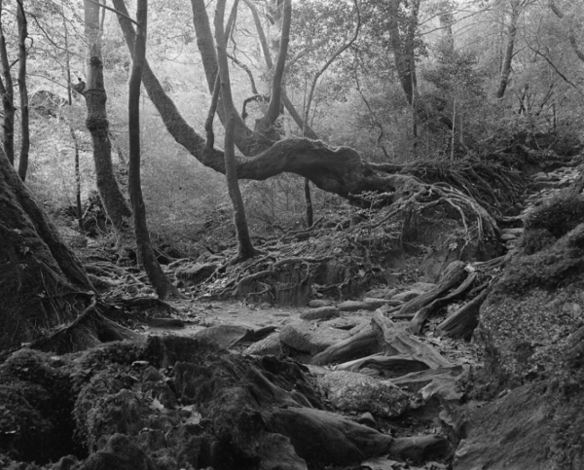 Yasuyuki Tagaki, Untitled #5, Forest. 2011 (via artligue.fr)